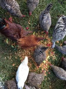 farm tour 059